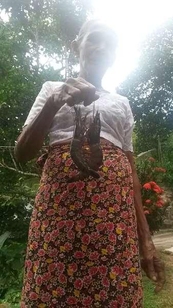 пожилая женщина креветки джамбо хиккадува