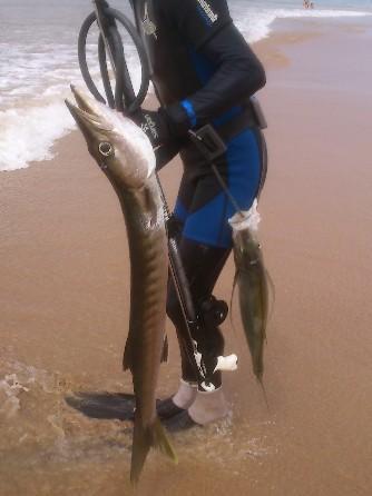 подводная охота Шри-Ланка барракуда